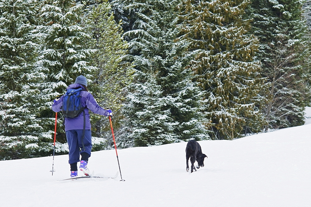 Mount Hood, Oregon, United States Of America; Person Cross-Country Skiing With A Dog