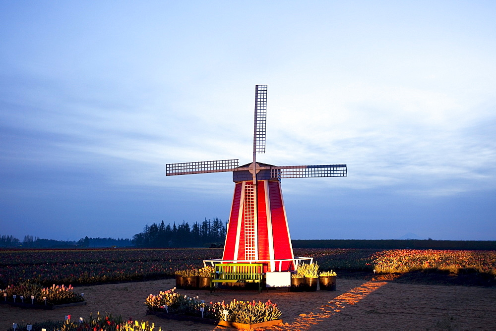 Woodburn, Oregon, United States Of America; A Windmill At The Tulip Fields