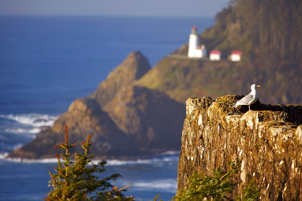 Oregon, United States Of America; Heceta Head Lighthouse Along The Coast
