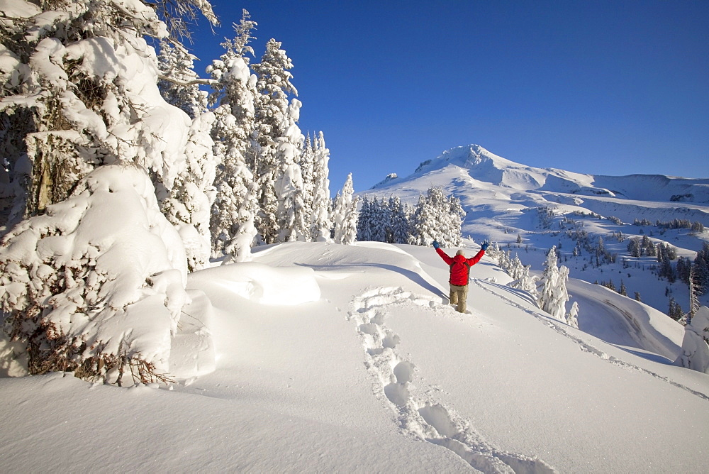 Timberline, Oregon, United States Of America; Snowshoer In Deep Winter Snow On Mount Hood
