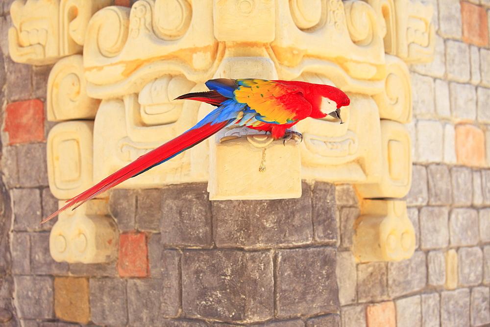 Roatan, Bay Islands, Honduras; Scarlet Macaw (Ara Macao) In The Rehab Center & Forest Preserve On Mango Key Across From Coxen Hole