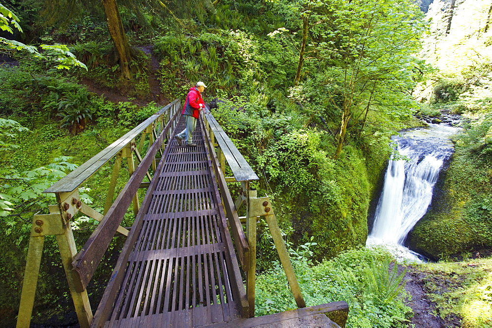 Oregon, United States Of America; A Man Standing On A Bridge Looking At Middle Oneonta Falls In Columbia River Gorge National Scenic Area