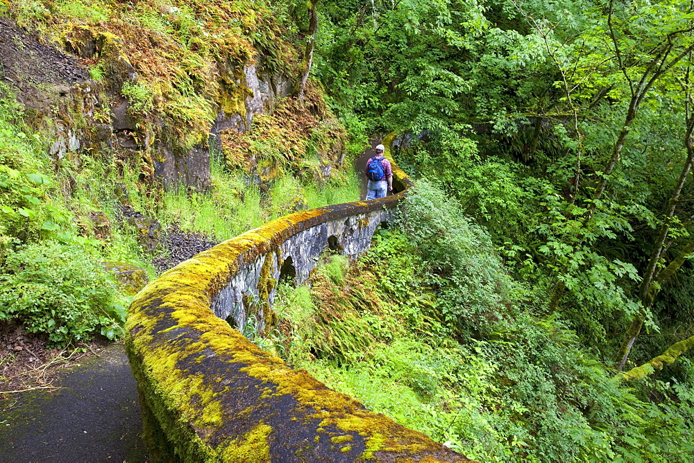A Hiker Along Sheppard's Del In Columbia River Gorge National Scenic Area; Oregon, USA