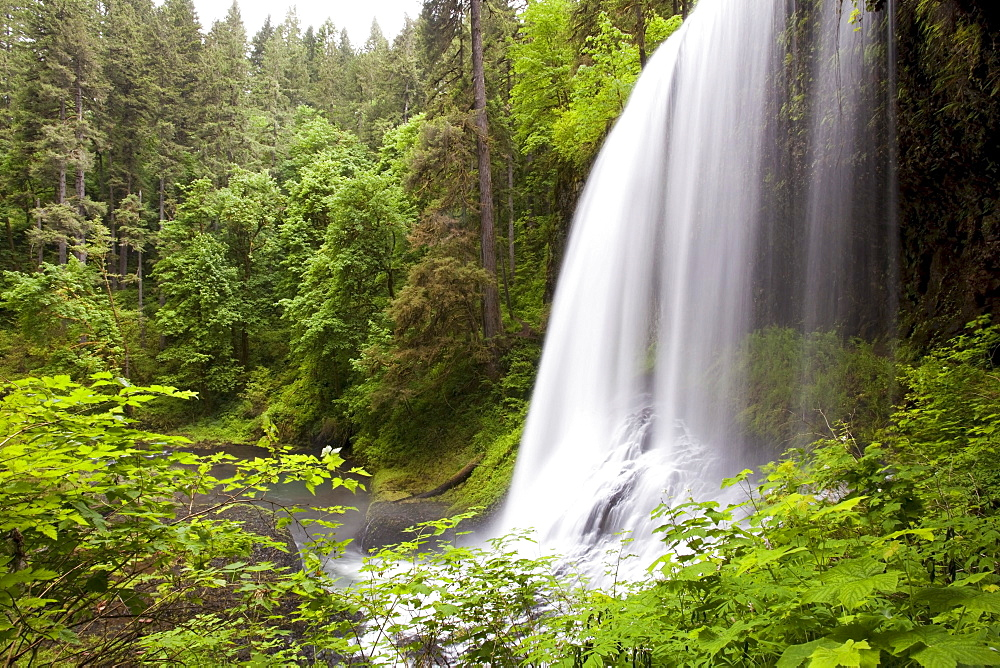 North Middle Falls In Silver Falls State Park; Oregon, USA