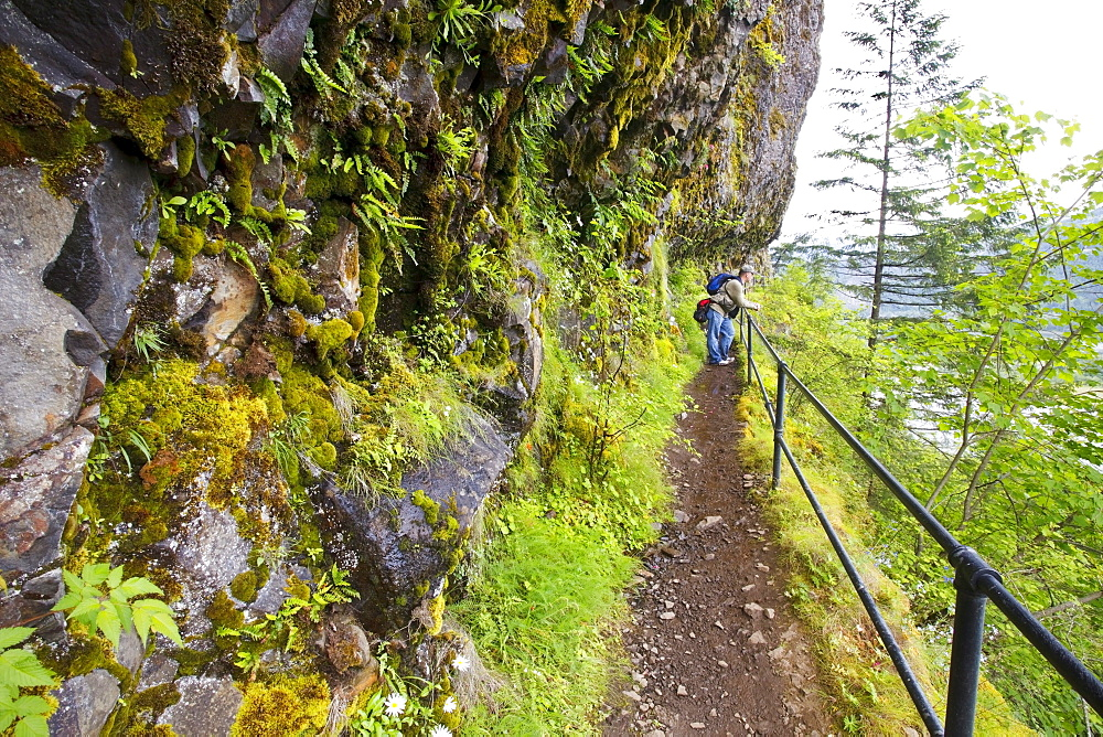 A Hiker On A Trail To Mccord Creek Falls In Columbia River Gorge National Scenic Area; Oregon, USA