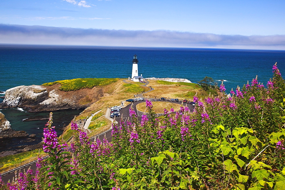 Wildflowers And Yaquina Head Lighthouse; Oregon, United States Of America