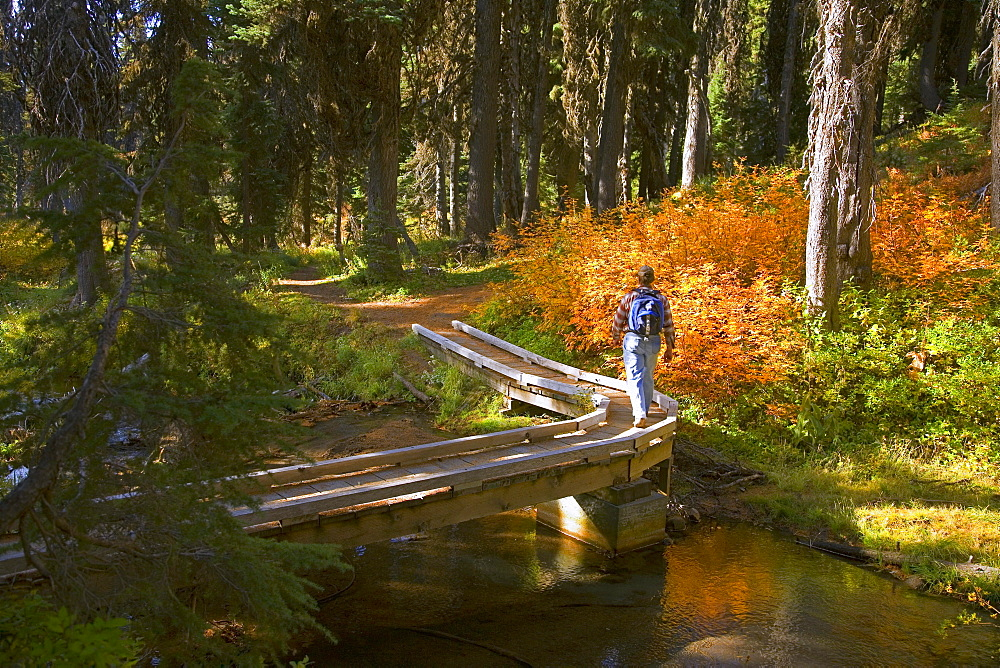 Hiker On Trail At Umbrella Falls In Autumn; Mount Hood National Forest, Oregon, Usa
