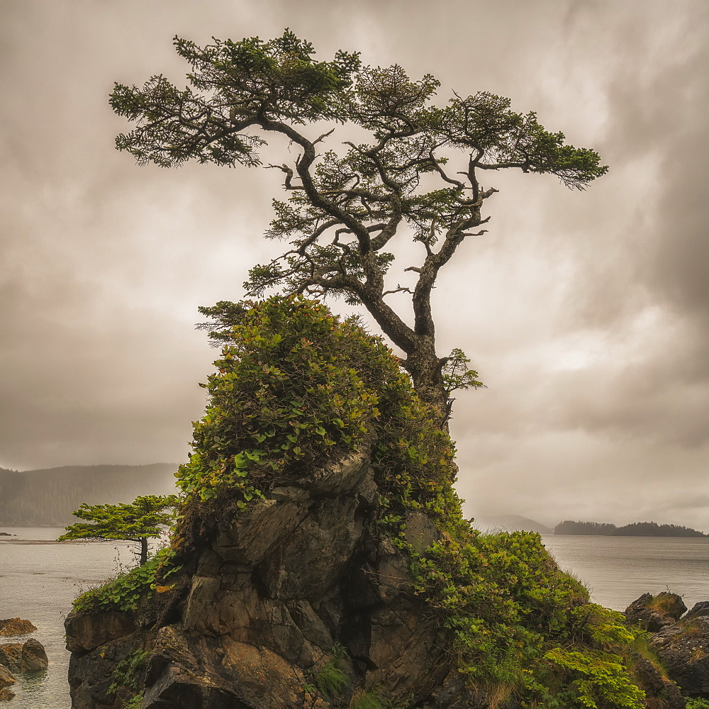 A Tree Stands Alone On A Rocky Hill Top Along The Shores Of Haida Gwaii, Haida Gwaii, British Columbia, Canada