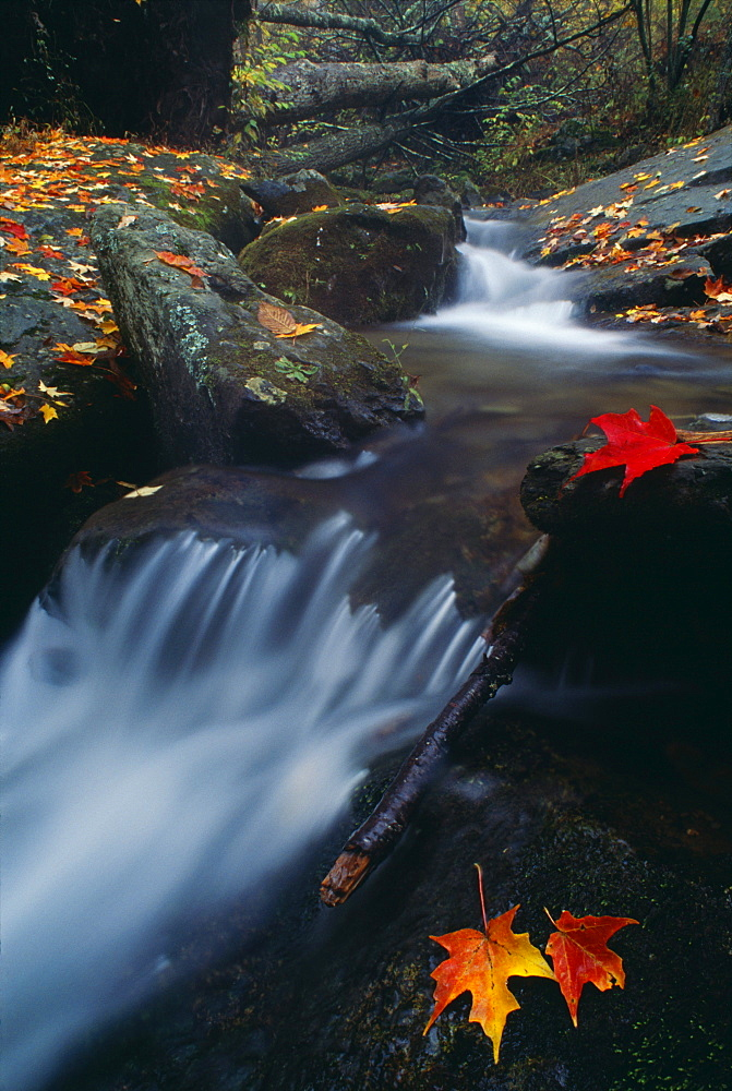 Stream In Shenandoah National Park, Virginia