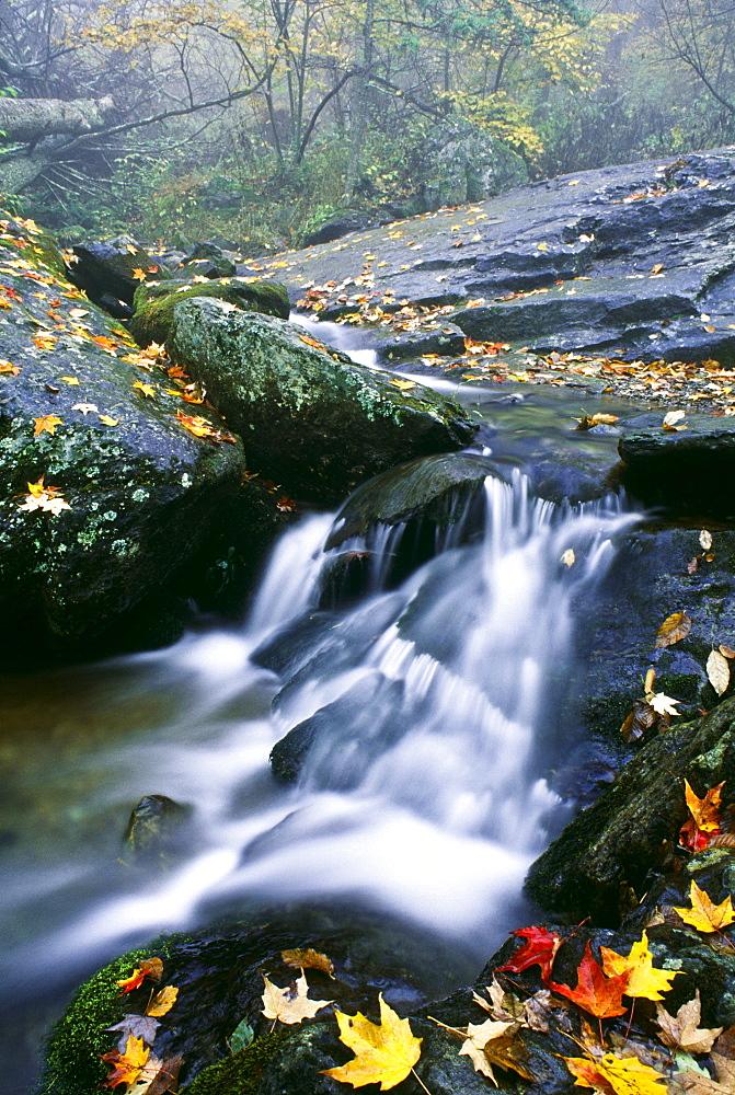 Small Stream, Shenandoah National Park, Virginia, U.S.A. - 1116-2974