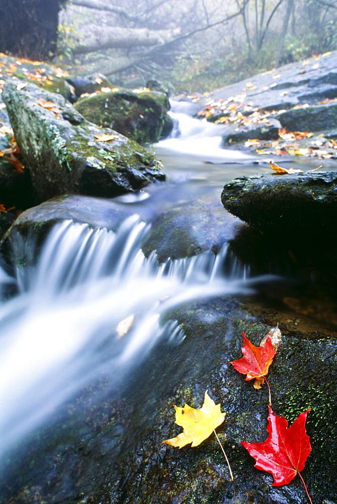 Small Stream, Shenandoah National Park, Virginia, U.S.A.