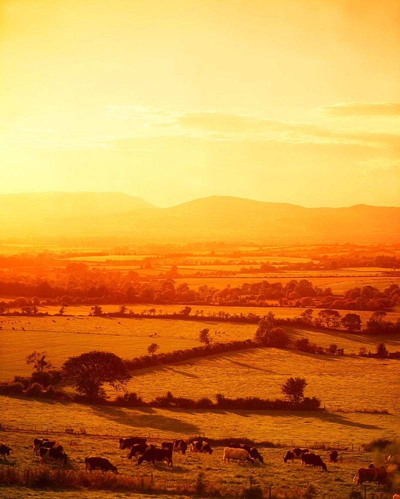 Mitchelstown, County Cork, Ireland, Galtee Mountains In The Distance