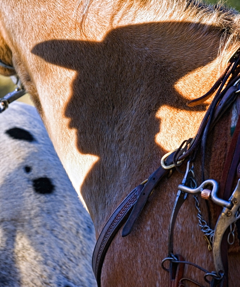 Shadow Of A Cowboy On A Horse