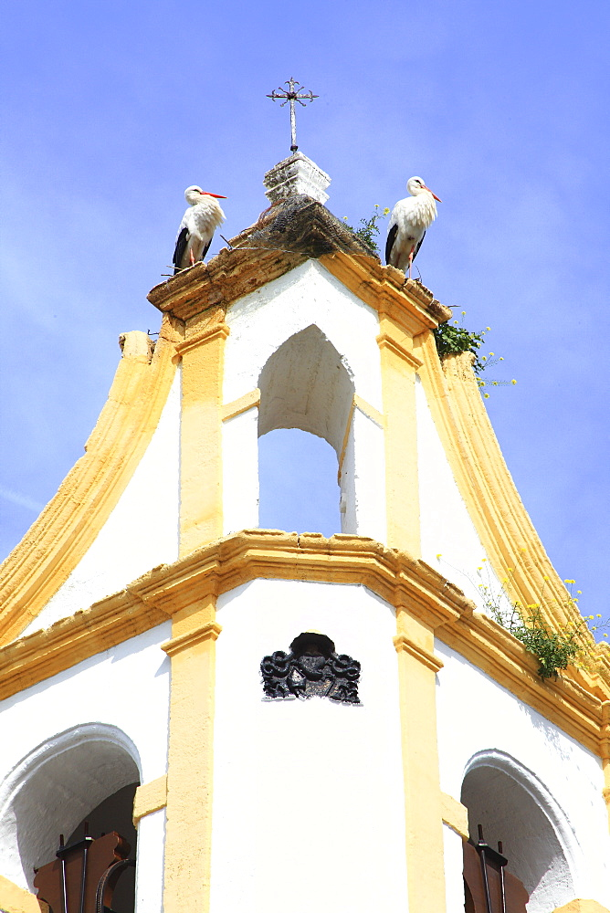 Storks On The Church Tower, Chiclana De La Frontera, Andalucia, Spain