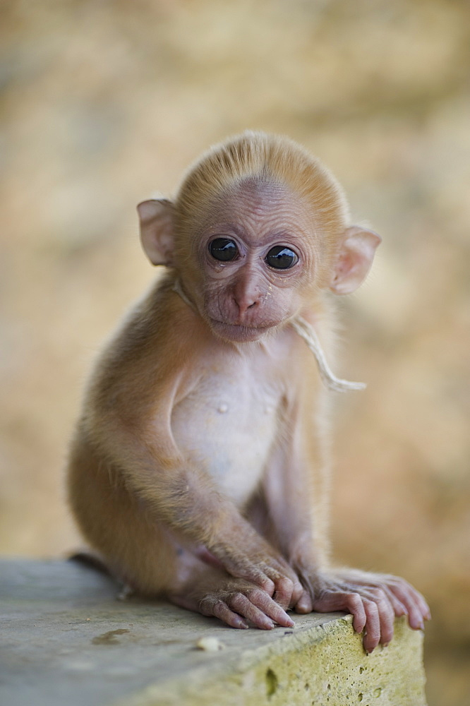 A Small Monkey
