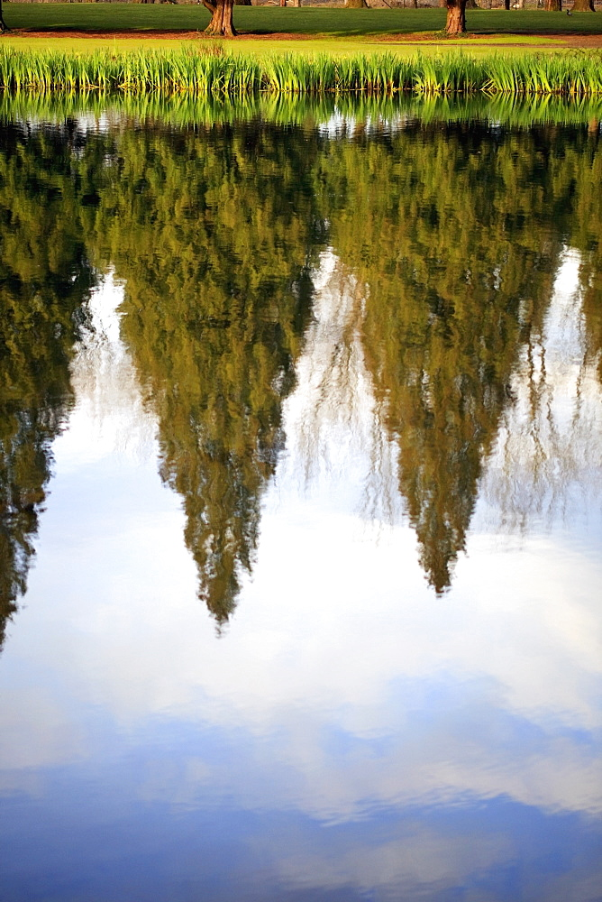 Oregon, United States Of America, Tall Trees And The Sky Reflected In The Water