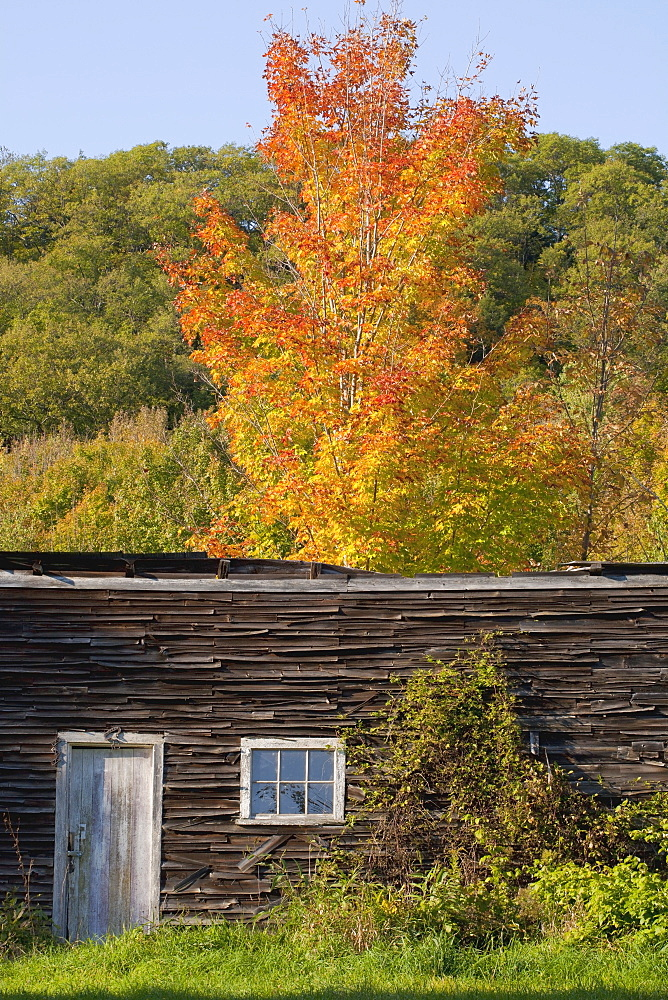 Old Shed With Trees In Autumn Colours, Iron Hill, Quebec, Canada