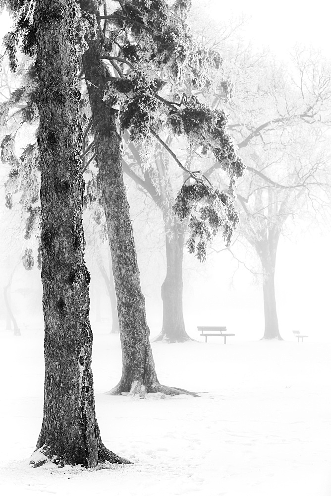 Ice fog in winter assiniboine park, Winnipeg manitoba canada