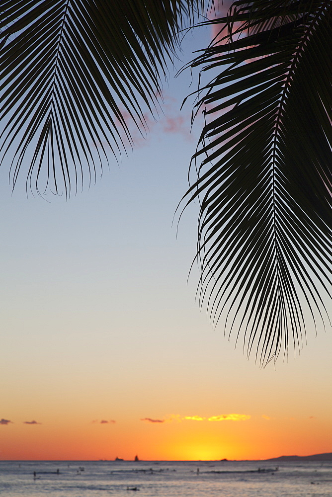 Silhouette of a palm frond and the sun setting over the pacific ocean, Oahu hawaii united states of america