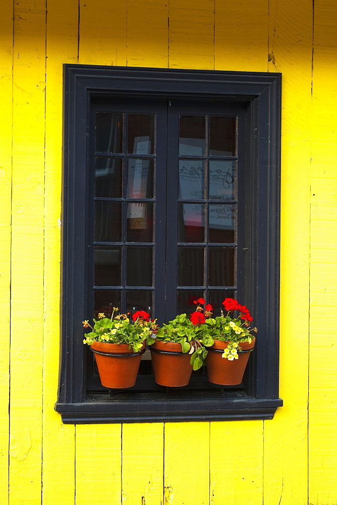 Flower pots on a window ledge, Trois-rivieres quebec canada