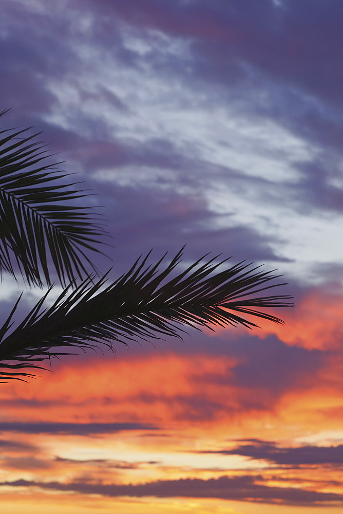 Palm Fronds Silhouetted Against Sunrise, Spain