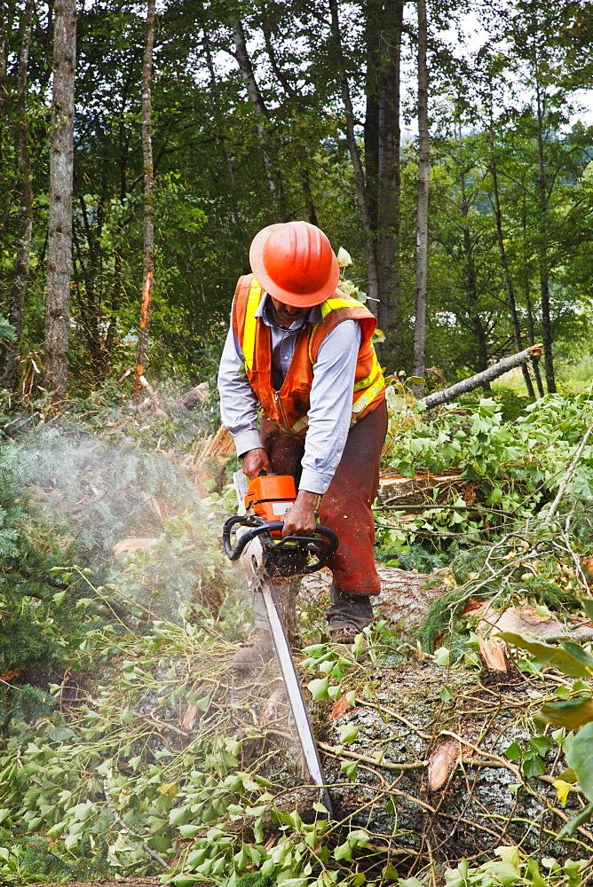 A Logger Uses A Chain Saw To Cut Trees, Portland, Oregon, United States of America