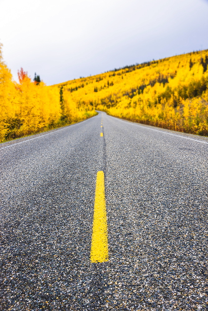 Road Detail Traveling The Steese Highway North Of Fairbanks In Autumn, Fairbanks, Alaska, United States Of America