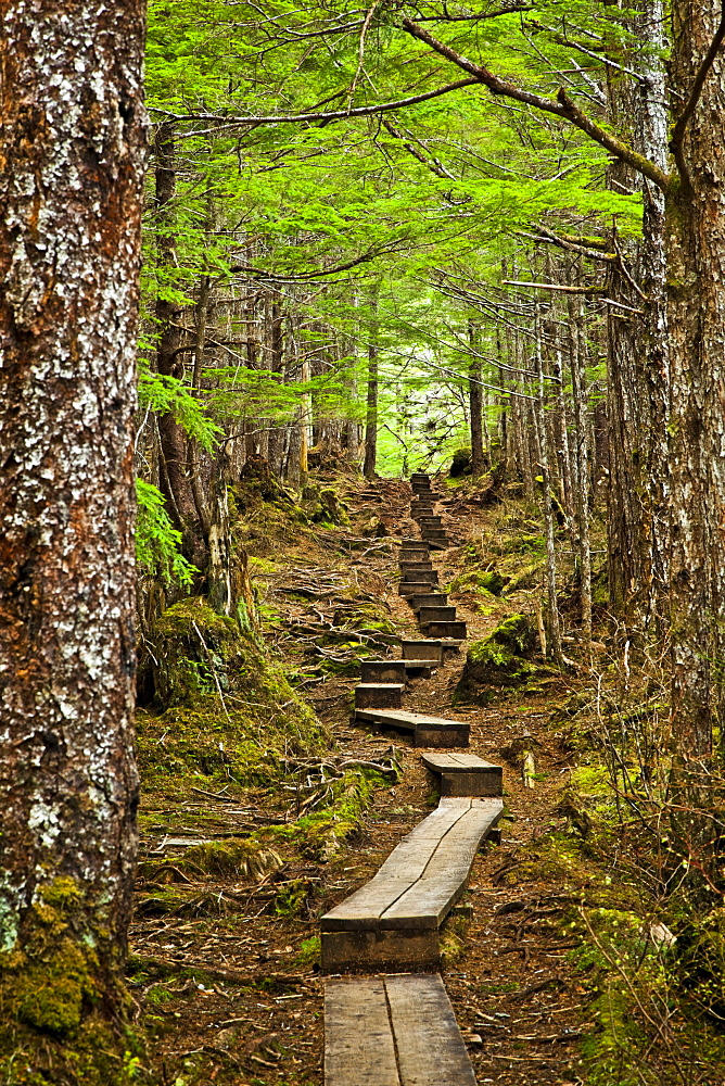 A Boardwalk Through The Mossy Rainforest, Gavan Hill Trail, Sitka, Alaska, United States Of America