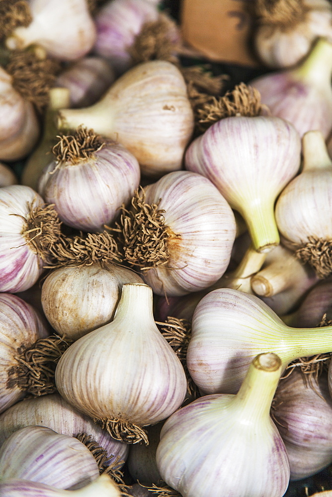 Large Clean Organically Grown Hardneck Garlic Bulbs, Toronto, Ontario, Canada