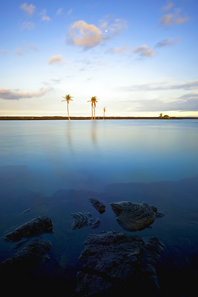 Kiholo Bay Pond, North Kona, Island Of Hawaii, Hawaii, United States Of America