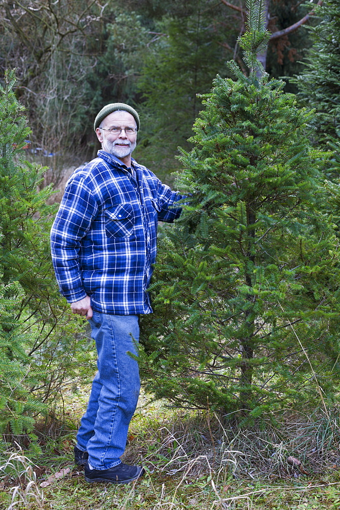 Christmas Tree Hunt, Yarrow, British Columbia, Canada
