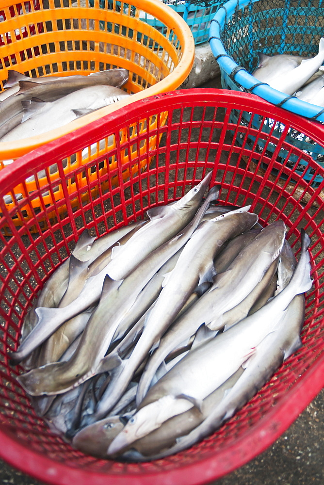 Some Small Sharks In A Red Plastic Basket From Bashi Market, Xiamen, Fujian Province, China