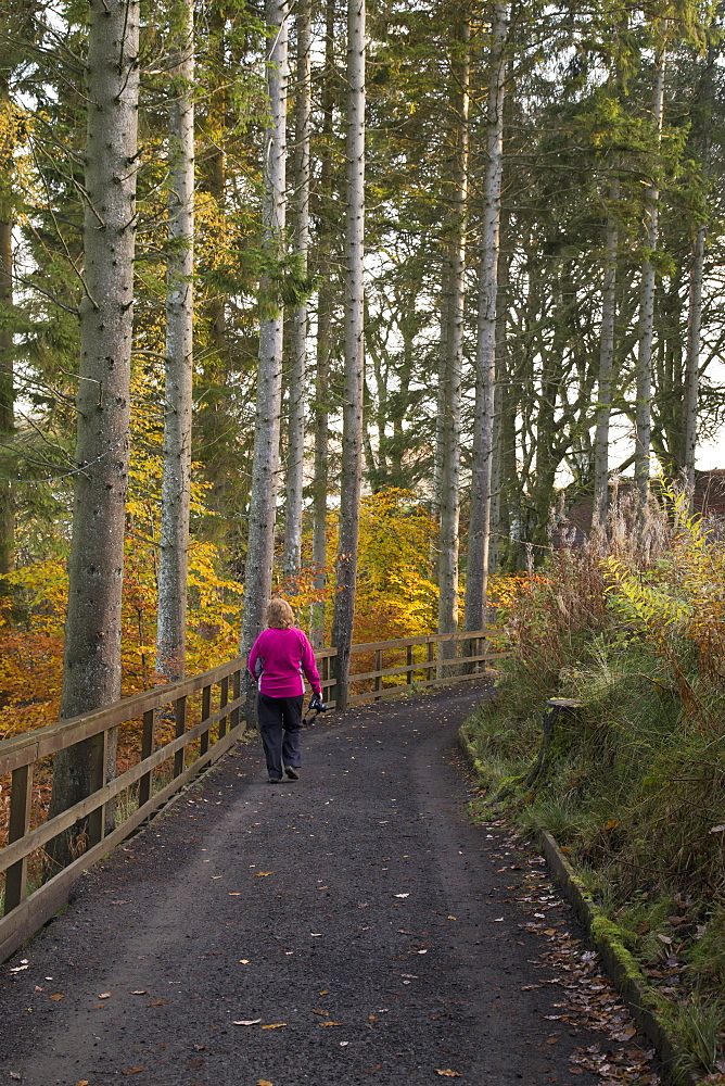 A Woman Walks On A Trail In Autumn, Kielder, Northumberland, England