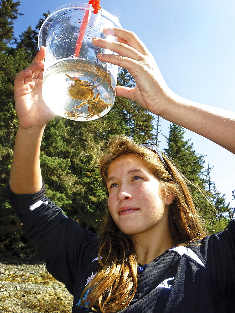 A Teenager Looks At Crabs Picked Up While Tidepooling In A Kachemak Bay Intertidal Zone Near Homer, Kenai Peninsula, Southcentral Alaska