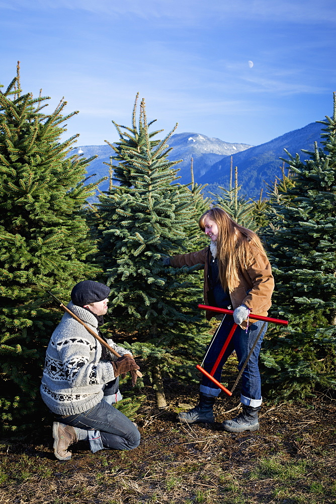 A Couple Searching For A Christmas Tree, Chilliwack, British Columbia, Canada
