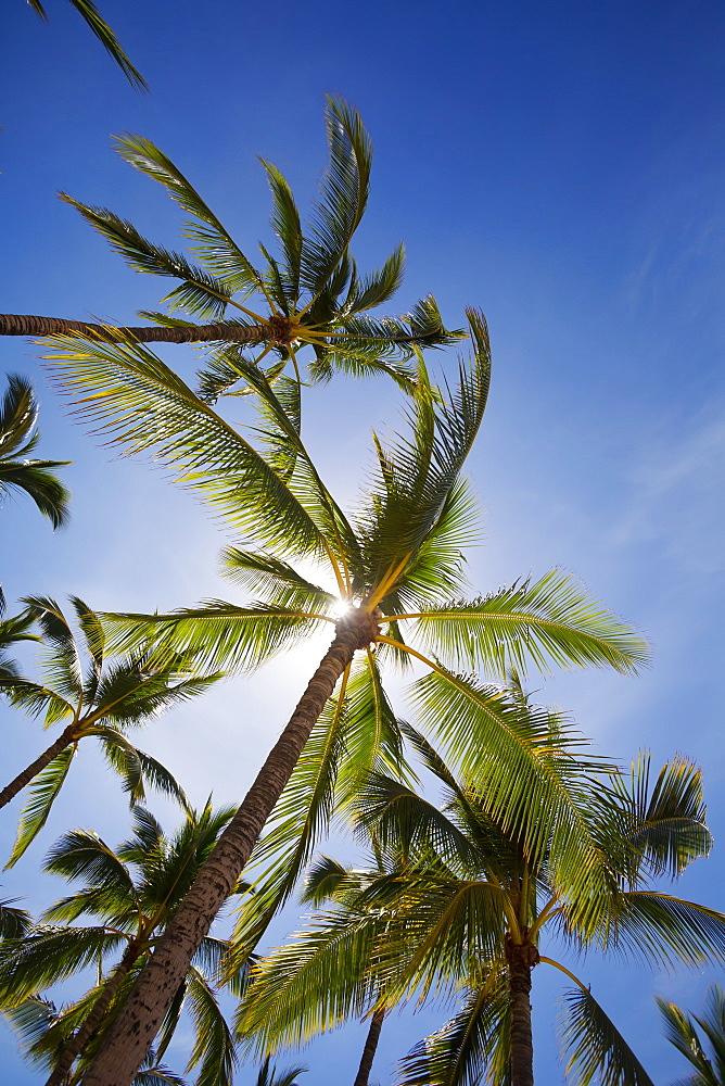 Sun Filtering Through Palm Trees At Hulupoe Beach, Manele Bay, Lanai, Hawaii, United States Of America