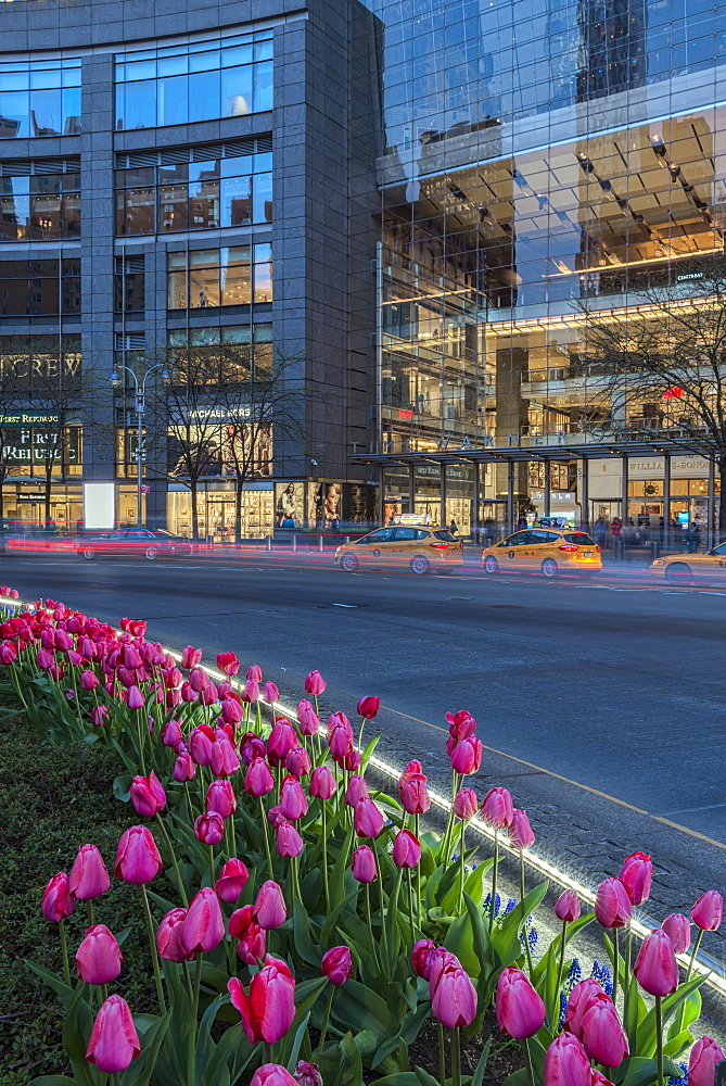 Tulip Display At Time Warner Center At Twilight, Columbus Circle, New York City, New York, United States Of America