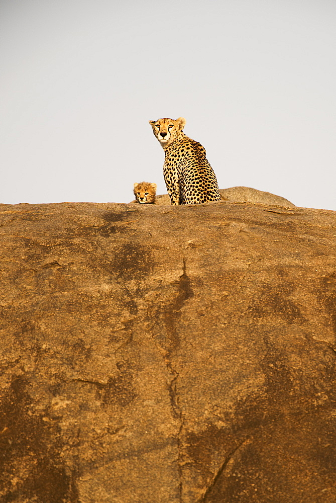 Female Cheetah (Acinonyx Jubatus) And Small Cub Peer From Rock Outcrop, Serengeti National Park, Tanzania