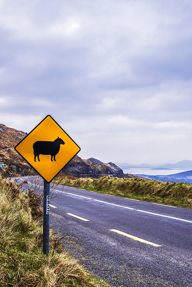 Sheep Crossing Sign Along The Ring Of Kerry, County Kerry, Ireland