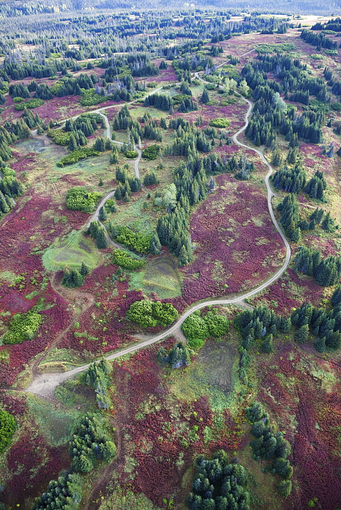 Aerial View Of A Road And Land Development Among Trees And Fireweed (Chamaenerion Angustifolium) On Kenai Peninsula, Alaska, United States Of America