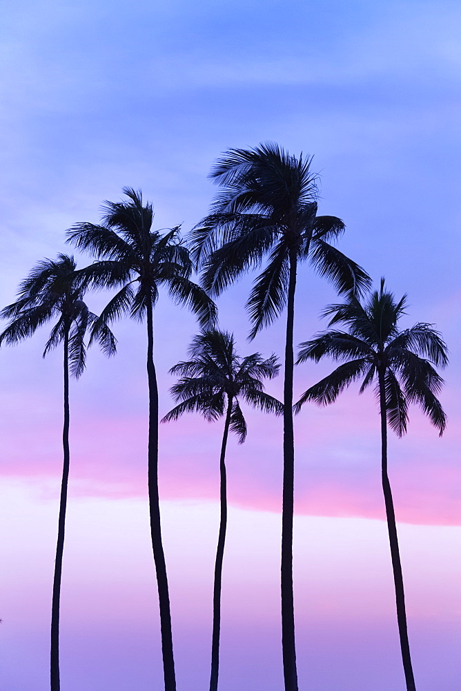 Five Coconut Palm Trees In Line With Cotton Candy Sunset Behind, Honolulu, Oahu, Hawaii, United States Of America