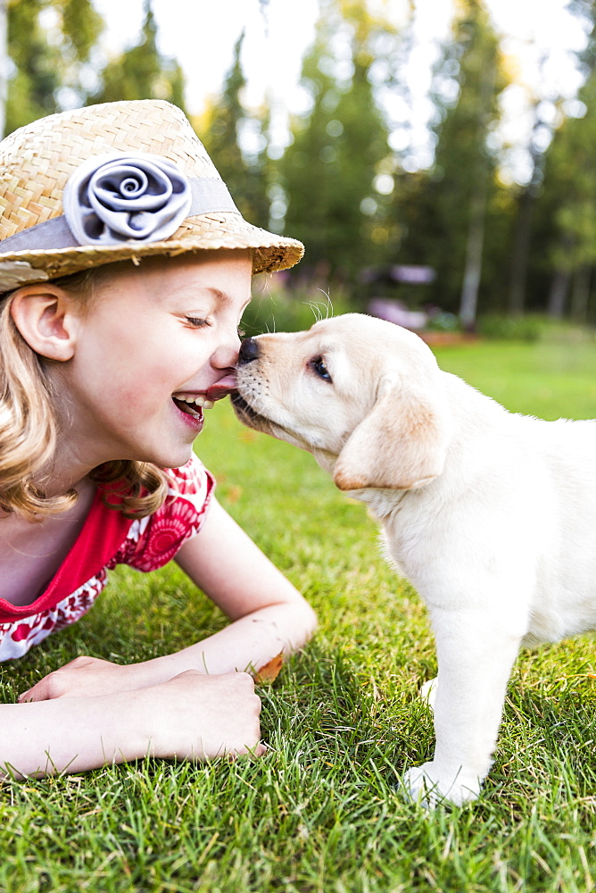 A Smiling Young Girl Wearing A Sundress And Hat Has Her Nose Licked By A Young Labrador Puppy, Anchorage, Alaska, United States Of America