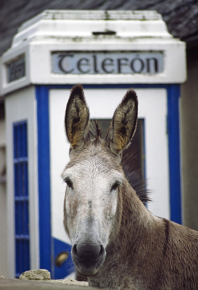 Donkey By Telephone Booth; Glenbeigh, County Kerry, Ireland