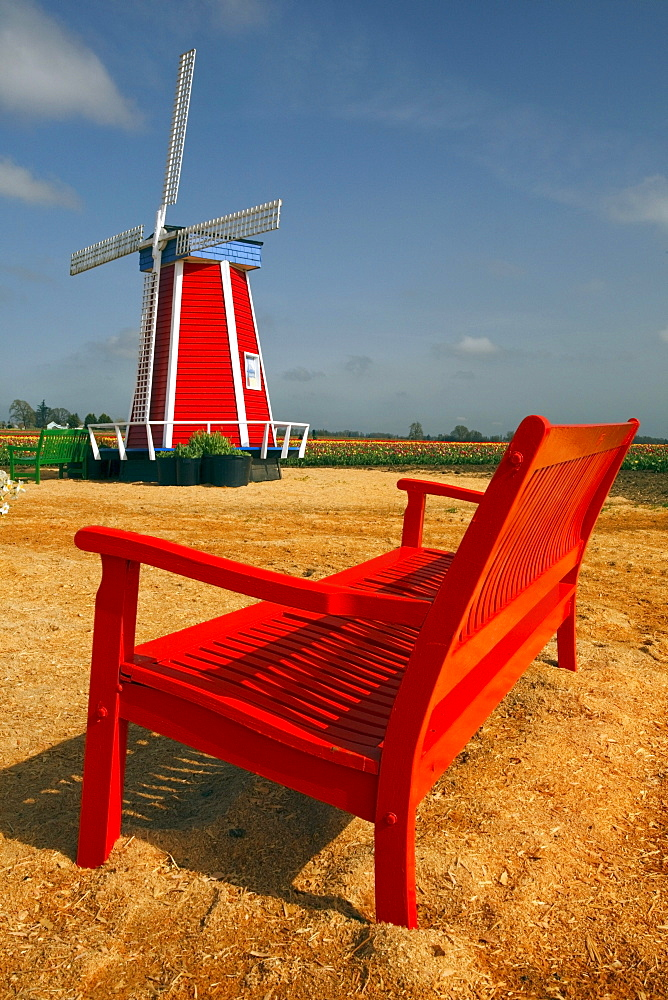Woodburn, Oregon, United States Of America; A Windmill And Bench At The Tulip Fields
