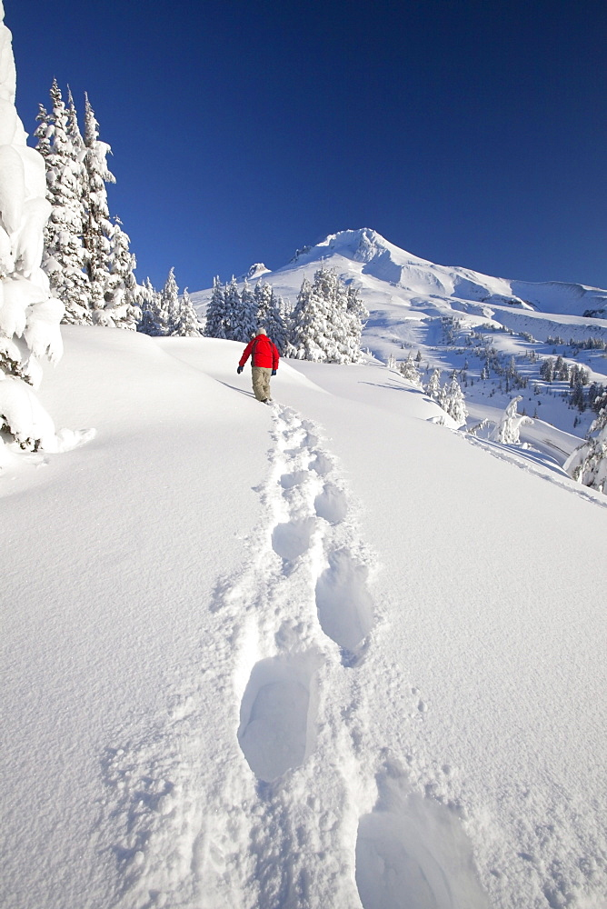 Timberline, Oregon, United States Of America; A Person Snowshoeing In Deep Snow On Mount Hood