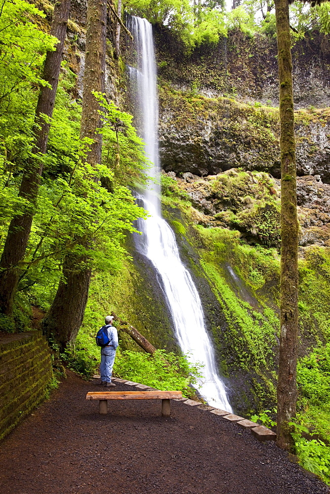 A Hiker At Winter Falls In Silver Falls State Park; Oregon, USA