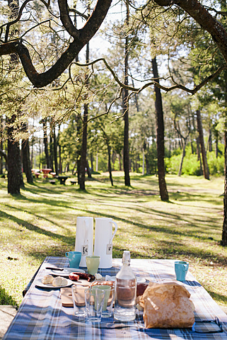 Breakfast served on table in forest