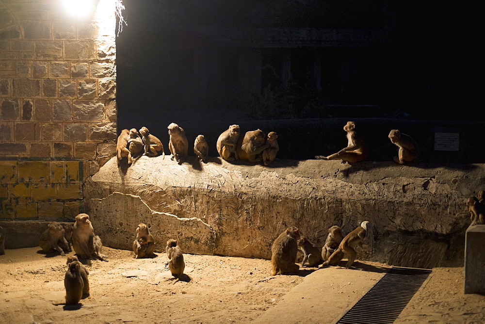 Monkeys sitting on wall at night