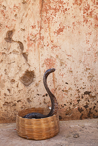 Snake in basket against weathered wall