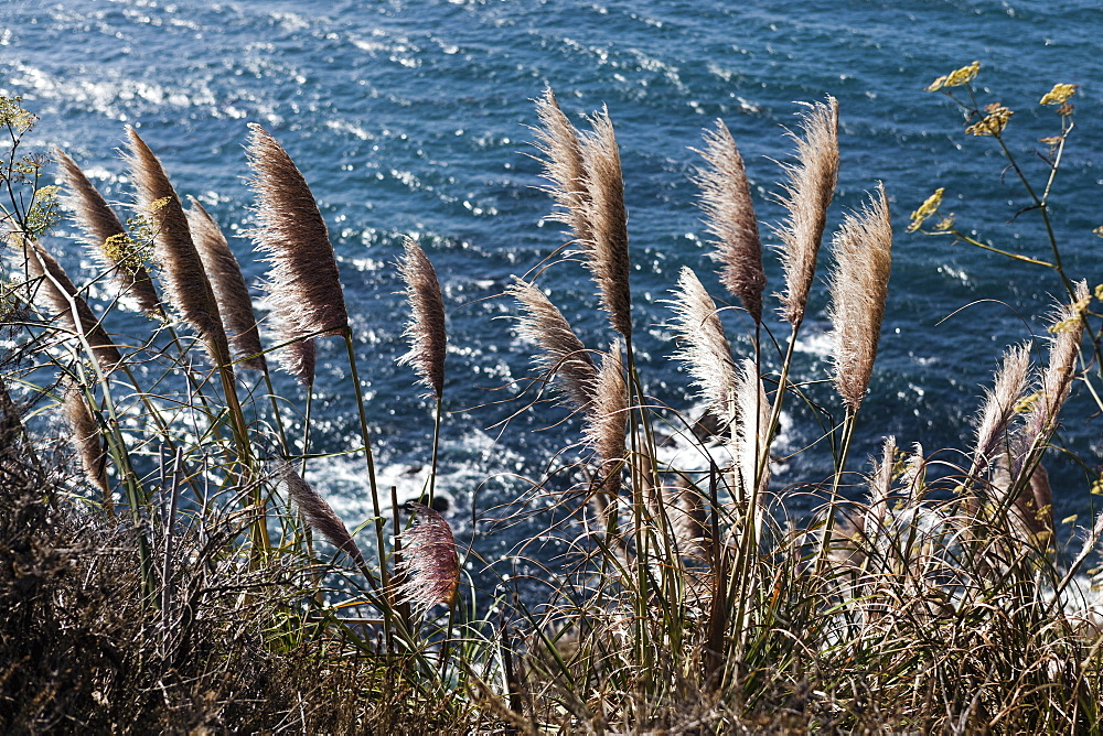 High angle view of pampas grass growing at lakeshore